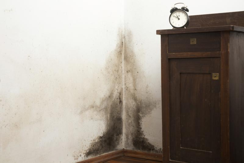 Mold & Mildew Treatment